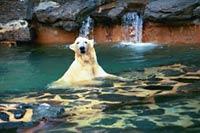 Alaska y su primer baño después de ser rescatada de un circo