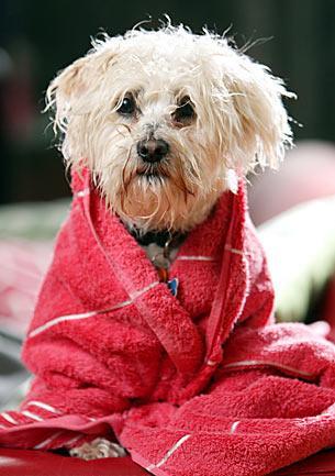 Perrito rescatado de morir ahogado en un río, salvado por un muchacho.