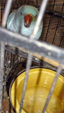 ave-con-jaula-y-agua-sucia-32