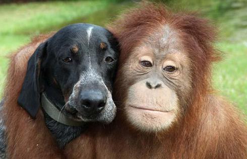 El perro llegó al Santuario donde está el orangután y se han convertido en los mejores amigos