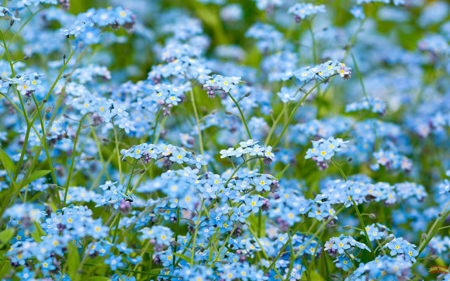 Mes de las flores-mariaxhe-30