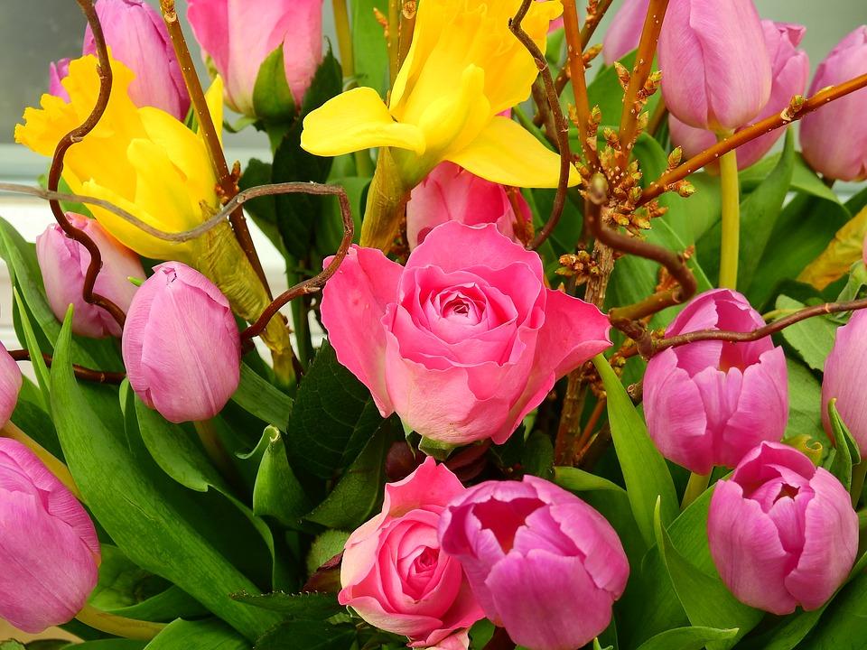 rose-2114785_960_720